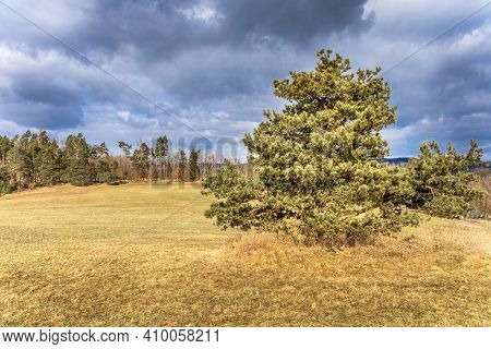 Stormy Day With Rain, Fall Colors And Dark Clouds In Czech Republic. Pasture With Pine In The Foregr