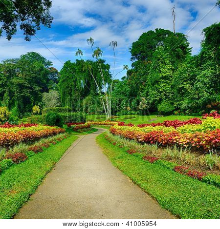 A Beautiful Alley In The Park With Exotic Plants