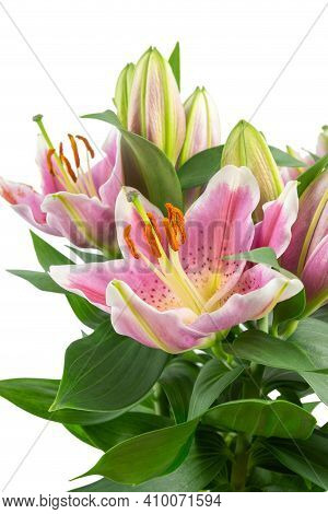 A Bouquet Of Pink Lilies Isolated On A White Background. Flower Greeting Card Template
