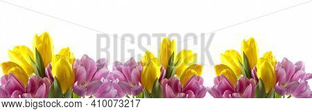 Spring Background. Flower In Garden At Spring Day. Flower For Decoration And Agriculture Concept Des
