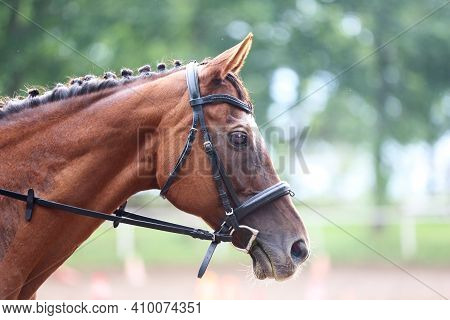 Unknown Contestant Rides At Dressage Horse Event In Riding Ground. Head Shot Close Up Of A Dressage