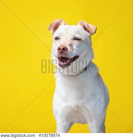 cute shelter dog portrait on an isolated background