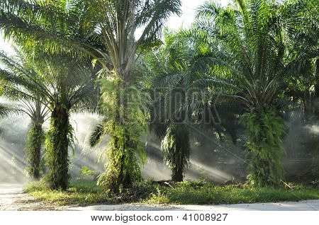 Palm Day Outdoor Fog Light Farm