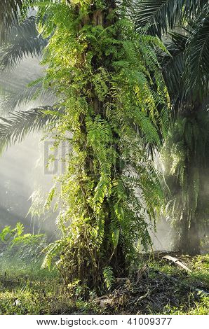Palm Outdoor Fog Light Farm Day