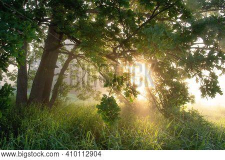 Bright Sunny Morning Nature Scene. Green Oak In Vivid Sunbeams In The Warm Misty Morning. Beautiful