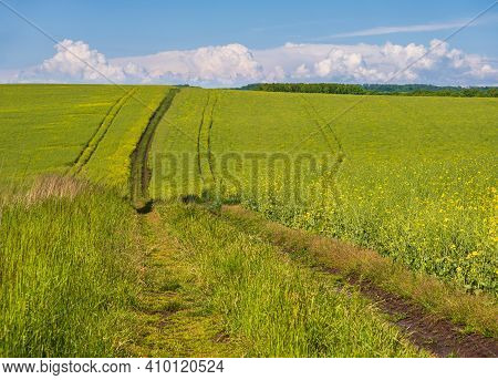 Spring View With Rapeseed Yellow Blooming Fields And Dirty Road, Blue Sky With Clouds. Natural Seaso