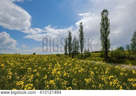 Road Through Spring Rapeseed Yellow Blooming Fields View, Blue Sky With Clouds And Sunshine. Natural