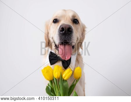A Cute Dog With Yellow Tulips In His Mouth And A Butterfly On His Neck Sits On A White Background. G
