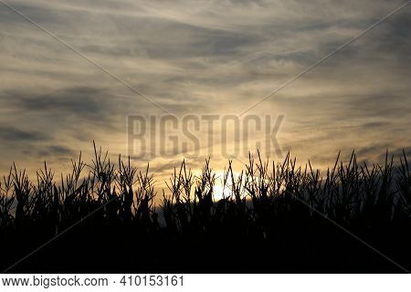 The Sun Rises Over A Cornfield On A Cloudy Morning.