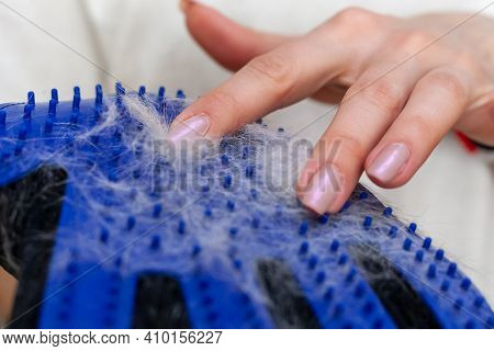 Girl With Cat Shedding, Bathing, Grooming, Deshedding Glove.the Glove With Cats Hair On It. Equipmen