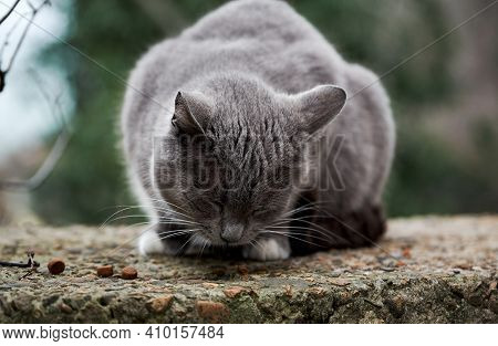 Cast Lone Cat Mutt Survive In Harsh Conditions. Beautiful Gray And White Street Cat Has Found Dry Fo
