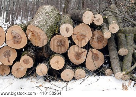 Log Ends Of Sawed Pine Logs Stacked In A Pile In The Forest On A Winter Day Front View Closeup