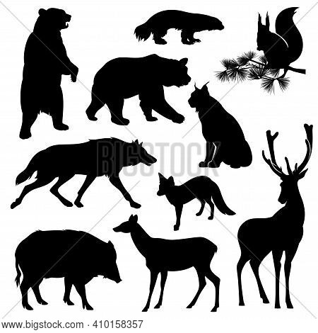 Set Of Realistic Detailed Black Vector Silhouettes Of Wild Animals From Eurasia And  North America