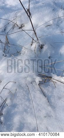 Dry Grass Breaking Through The Cold Snow