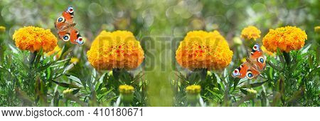 Yellow Blooming Marigolds And Butterflies, Unfocused Widescreen Background. Selective Focus, Banner