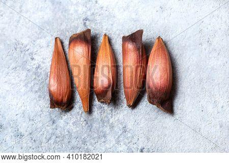 Raw Edible Chilean Patagonian Pinones Pine Nuts Of Pine Or Monkey Puzzle Tree Araucaria Araucana