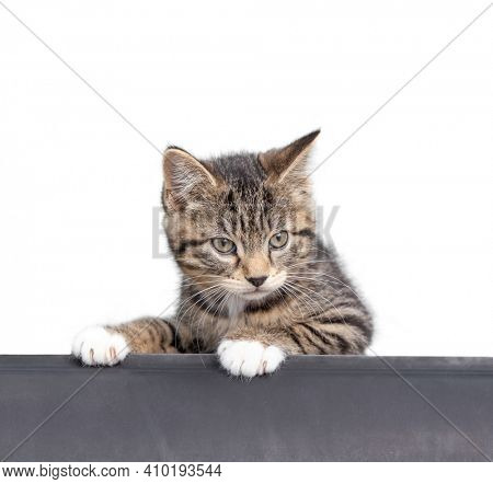 cute shelter kitten portrait on a white isolated background