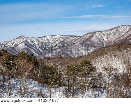 The Snow-covered Forests Of The Japanese Alps Near The Shiga Kogen Ski Area In Nagano Prefecture, Ja