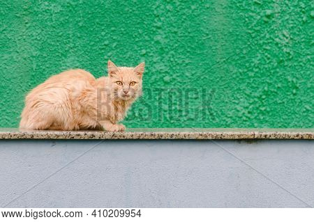 Red Cat Lies At The Green Fence.  Homeless Cat At Bright Background.