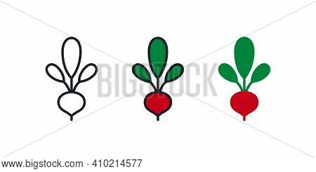 Beetroot Icon. Linear Color Icon, Contour, Shape, Outline Isolated On White. Thin Line. Modern Desig