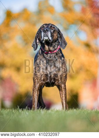 cute dog portrait on an outdoor background