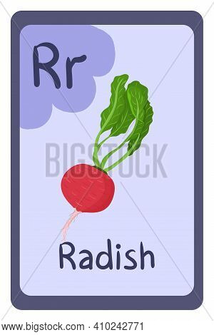 Colorful Abc Education Flash Card, Letter R - Radish, Red Root With Green Leaf. Alphabet Vector Illu