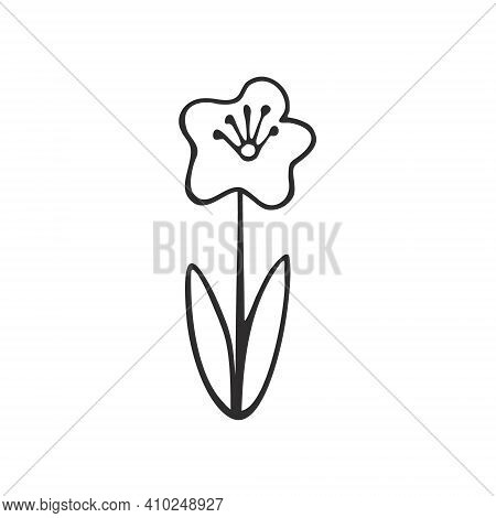 Poppy Flower Isolated On A White Background. Flowers, Nature And Plants. Contour Doodle Illustration