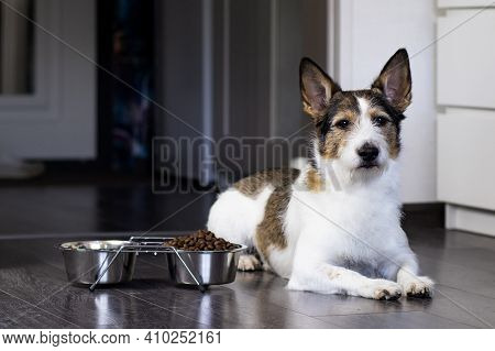 Portrait Of A Sad Dog, The Dog Lies Near His Bowl Of Dry Food, Serious Look. Home Serious Pet Eats A