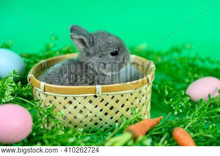 Rabbit On Green Screen Background. Spirit Animal And Clever Pet For Easter