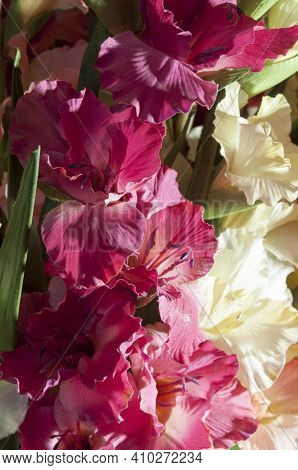 Artificial Gladiolus Branch. The Flowers Of Gladioli Are Red And White.