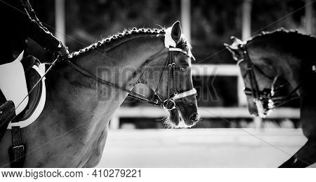 Equestrian Sport.the Leg Of The Rider In The Stirrup, Riding On A Horse. Portrait Sports Stallion In