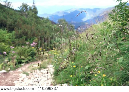 Wild Nature In Low Tatras (nizke Tatry) On The Way From Chopok Mountains. Landscape Scenery With Col