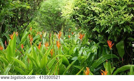 Water Drops Watering Flowers. Drops Of Water Irrigate Green Tropical Foliage With Flowers