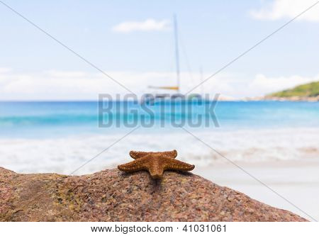 Detail Shore Dream