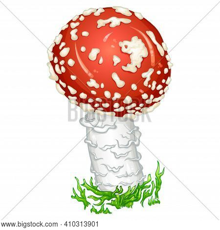 Red Amanita Fly Agaric Mushroom With Green Moss. Spotted Poisonous Mushroom. Medicinal, Magic, Toxic