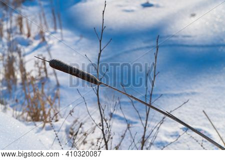 Single Cattail In A Snowy Winter Background