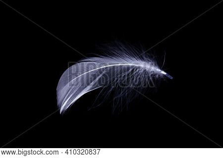 Feather Texture. Nature Abstract Bird Feather Closeup Isolated On Black Background In Macro Photogra