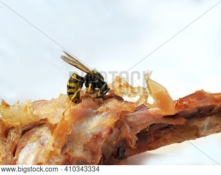 Insect. Wasp Eats Chicken. A Close-up Of The Chicken Leg That The Wasp Eats