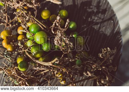 Simple Food Ingredients, Small Unripe Tomatoes On Dry Branches On Wooden Table