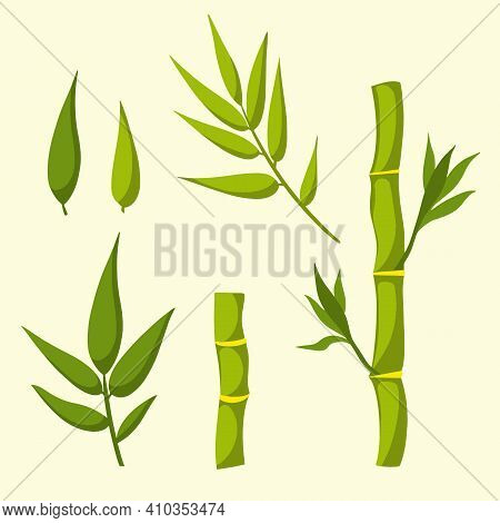 Bamboo With Green Stems And Leaves. Vector Flat Isolated Illustration.