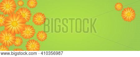 Top View Of Orange And Yellow Calendula Or Marigold Flower Buds On Green Backdrop, Floral Botanical
