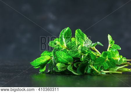 Green Culinary Herb Mint On A Black Background. Peppermint, Spearmint.