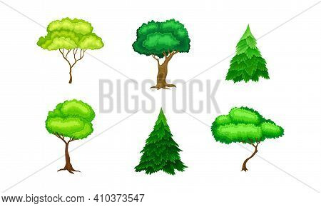 Different Trees As Perennial Plant With Trunk, Branches And Leaves Vector Set