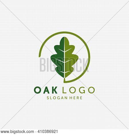 Emblem Of Oak Leaf Logo Vector Design Vintage Illustration, Healthy Logo, Acupuncture Spa Logo Vinta