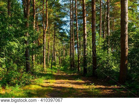 Woods landscape, spring woods and narrow path lit by soft sunlight, sunset in the woods, woods trees under the sun, woods nature, colorful woods landscape, woods trees