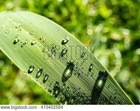 Group Of Perfect, Small Water Drops On Green Leaf With Bright Light Reflections And Grass Background