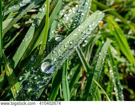 Group Of Perfect, Water Drops On Green Leaf With Bright Light Reflections And Grass Background Early