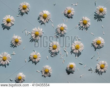 Flat Lay Spring Or Summer Chamomile On Light Blue Background In Sunny Day. Daisy Flowers With Scatte