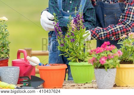 Close Up  Plants. Family Mother And Kid Daughter Plant Sapling Tree Outdoors In Nature Spring For Re