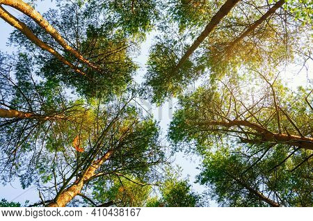Forest summer landscape, summer forest tree tops on the background of the blue sky, summer forest trees at sunset, summer forest nature, summer forest trees, summer forest season, summer forest landscape